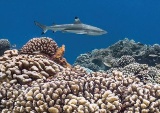 diving-e-tahiti-travel