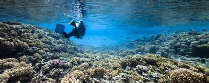 Diving_in_French_Polynesia_#04_1