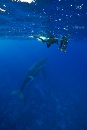 Diving_in_French_Polynesia_#05_2