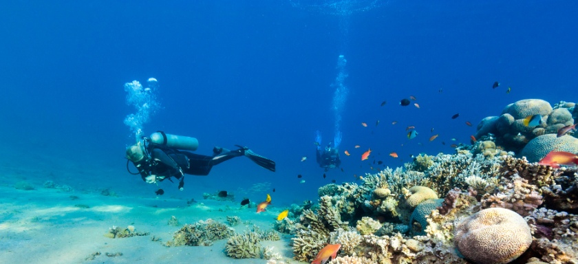 Diving_in_French_Polynesia_#08_4