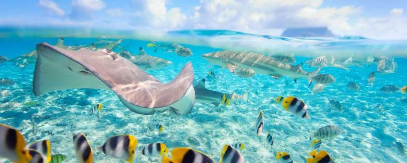 entete_img_polynesie_plongee_bora_bora_pastenague_et_requin_pointes_noires_shutterstock_blueorange_studio_113913454