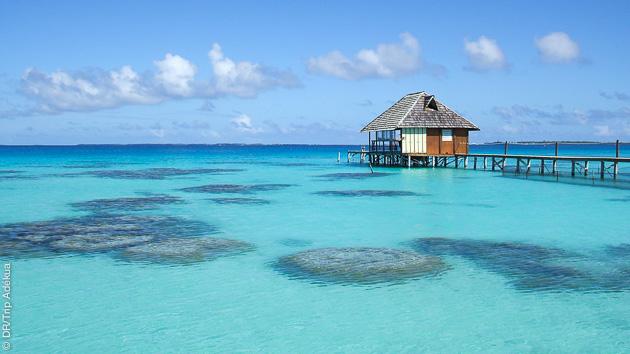 voyage-plongee-tahiti-dive-trip-adekua
