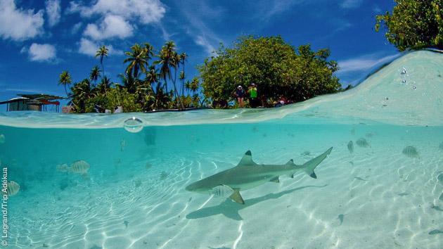 voyage-plongee-trip-adekua-tahiti-4