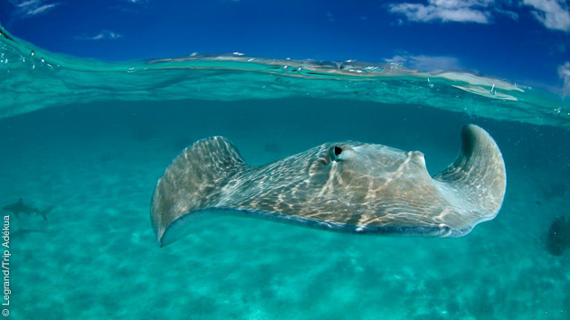 voyage-plongee-trip-adekua-tahiti-5